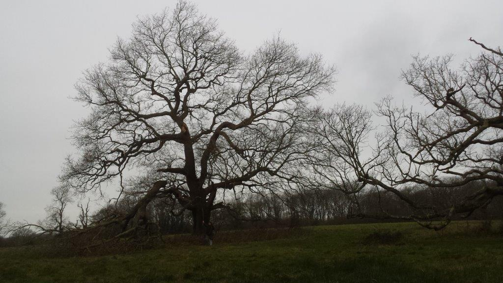 wintry oak broad green binsted