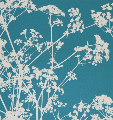 cow parsley by Gilly Mccadden
